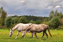 Dsc-0617-due-cavalli