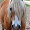 Dsc-0693-weisse-pferde-maehne