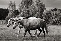 HORSE POWER von captainsilva