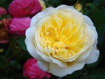 Rose für Natascha by Ka Wegner