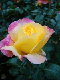 Rose für Elisabeth by Ka Wegner