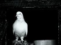 Angry bird I by Mahir Anil Kozan