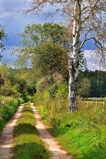 Waldweg mit Birke von captainsilva