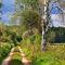 Dsc-0610-waldweg-birke