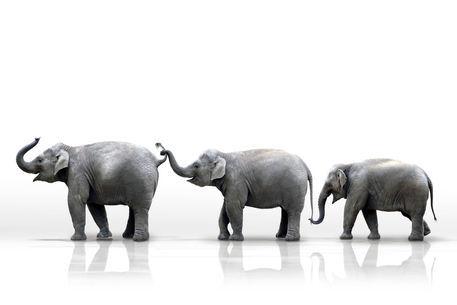 Drei-elefanten-parade-weier-hg