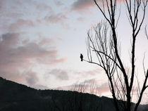 Bird by Andrea Liuzza