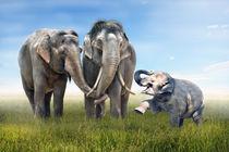 Elefanten Familienglück von Werner Dreblow