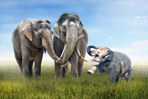 Elefanten-familien-glck-verk
