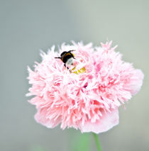 flower with a bee by Viktoria Papp