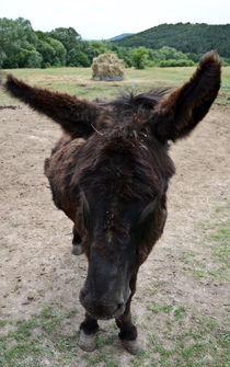 donkey by Viktoria Papp