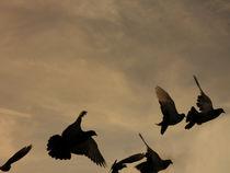Birds by Andrea Liuzza