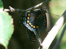 Butterfly-black27