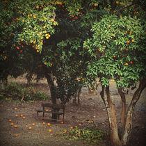 Orange garden by Nataliia Kashevko