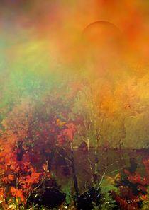 Herbstlicht by Eckhard Röder