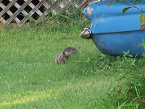 Groundhog2 by Martha Abell