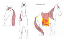 Horse von Noushka Woszczylo