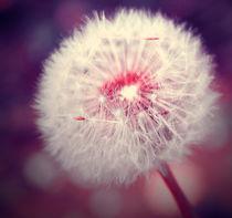 Dandelion by Yevgeniya Prorvina