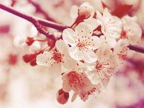 Apricot tree by Yevgeniya Prorvina