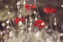 Poppies by Yevgeniya Prorvina