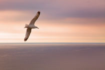 seagull by photoplace