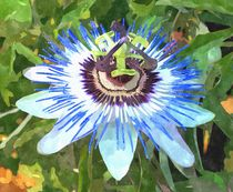 Passion Flower by Andre Bacchi