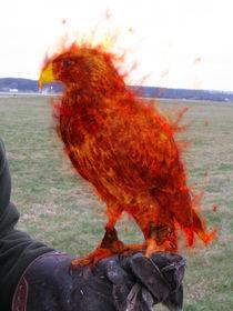 Phoenix  by balrond