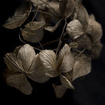 Blätter im Herbst von Max Nemo Mertens