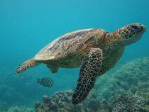 Sea Turtle von Alexander Daniels
