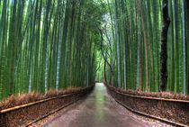 The Bamboo Path by Michael Ciaglo