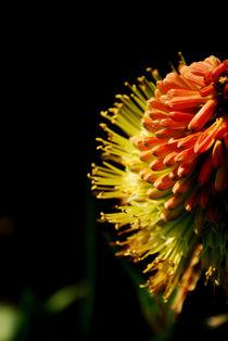 0855flower