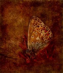 farfalla by paula aguilera