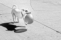 Happy-party-dog