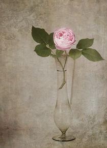 Nostalgie-Rose by Franziska Rullert