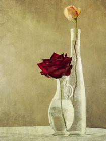 roses von Franziska Rullert