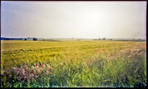 Mustard Fields, Pinhole Picture by Pia Sundnes