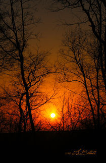 Evening-sun