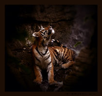 Tiger-falls-i