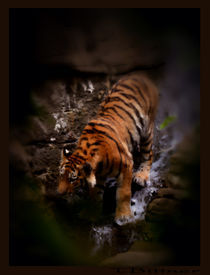 Tiger Falls by Tracy Bittner