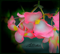 Pink Delicacy von Tracy Bittner