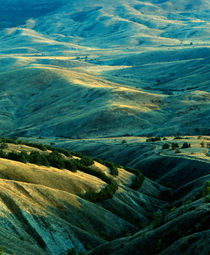 Golden hills under the evening sun by Dmytro Tolokonov