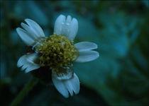 Flower by Anastazia Hamilton