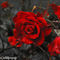 Weeping-rose