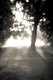 morning haze by nitya ramchandran