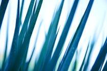 Blaues Gras von sonaeo