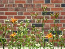 Wall Flowers von Audrey J. Ross