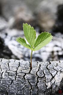 Unforeseen Emergence (vertical leaf) von Raku  Inoue