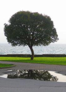 Blissful Refletion von Elyse Pyle