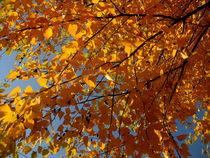 Autumn Life von Elyse Pyle