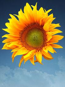 Sunflower von flowers-and-sun