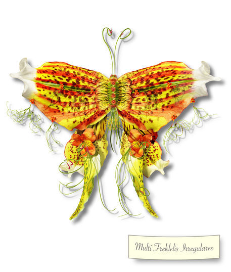 Butterfleur002-tcherevkoff
